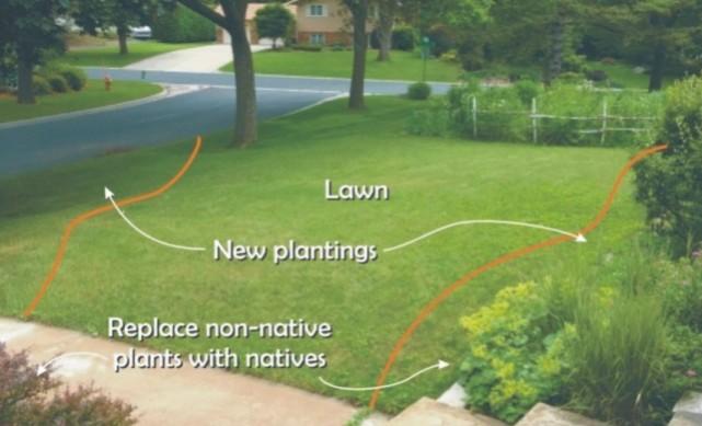 Front-yard-plan
